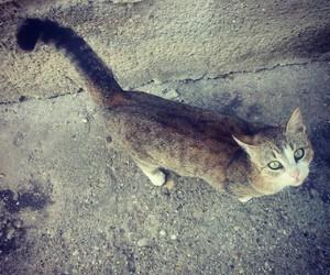 cat, instagram, and cute image