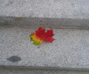 leaves and fallenleaves image