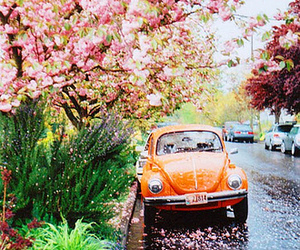 car, cherry blossoms, and orange image