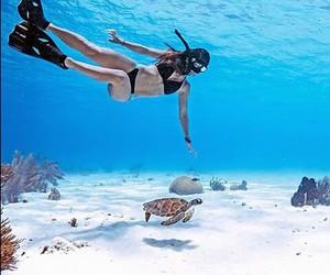 sea, summer, and turtle image
