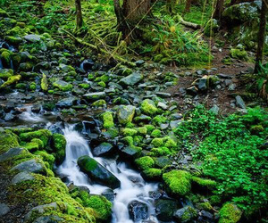 brook, exotic, and forest image