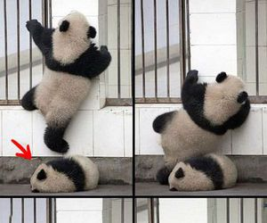 babies, lovely, and pandas image