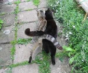 cat, tumblr, and animal image