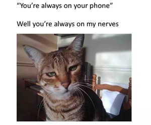 funny, phone, and nerves image