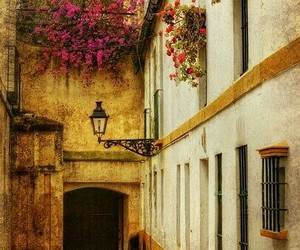 spain, flowers, and seville image