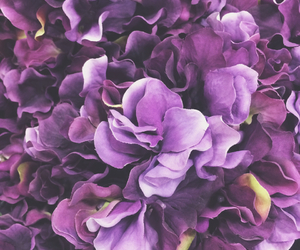 fake, flowers, and purple image
