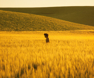 yellow, field, and nature image
