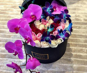 flowers, rose, and orchid image