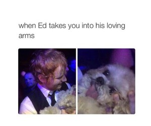 ed sheeran, funny, and dog image