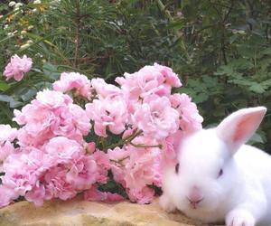 animals, botanical, and flowers image
