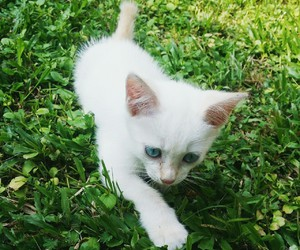 cat, green, and cute image