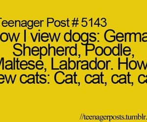 dog, teenager post, and cat image