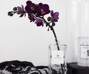 flowers, purple, and orchid image