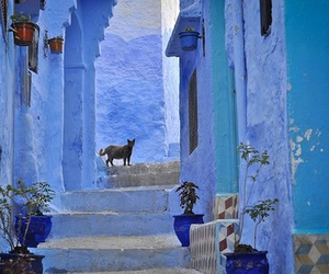 blue, morocco, and cat image