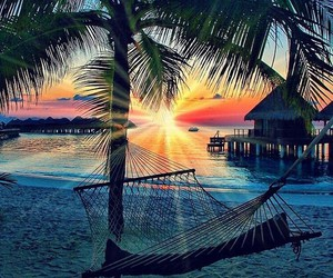 hammock, palm trees, and paradise image