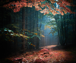 beautiful, path, and red image