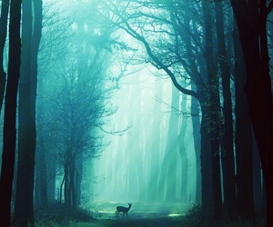 deer, forest, and light image