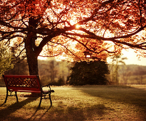 autumn, tree, and bench image