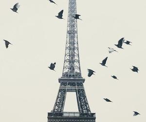 paris, bird, and france image