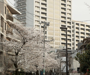 japan, street, and building image