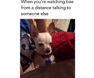 bae, dog, and funny image