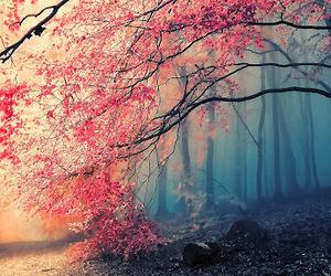 amazing, multicolor, and naturaleza image