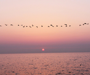ocean, beautiful, and birds image