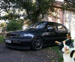 auto, car, and cat image