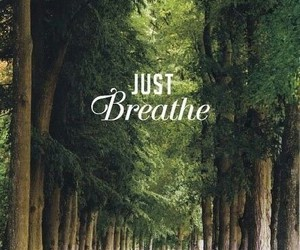 breathe, nature, and forest image
