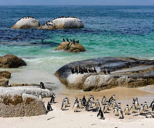 beach, boulders, and south africa image