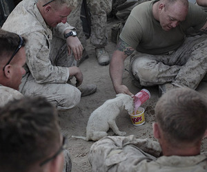 dog, puppy, and soldier image