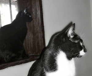 black, window, and cats image