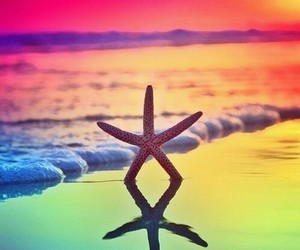 beach, sea, and starfish image