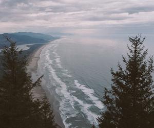 sea, nature, and tree image