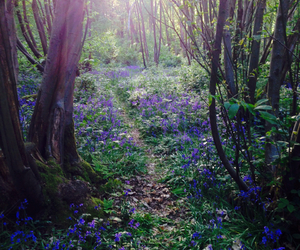 bluebells, nature, and walk image