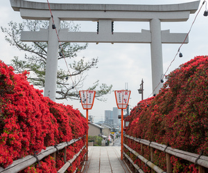 japan and red image