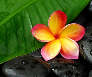 flower, tropical, and exotic image