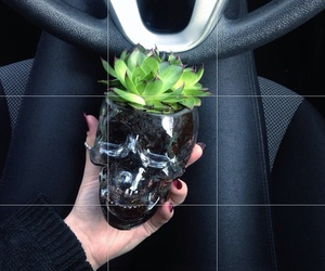 plants, black, and grunge image
