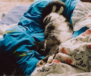 cat, bed, and sleep image