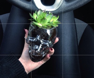 plants, black, and grunge image