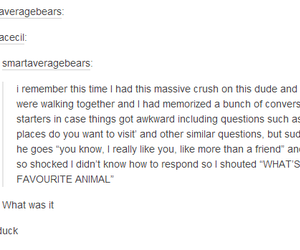 crush, tumblr posts, and duck image
