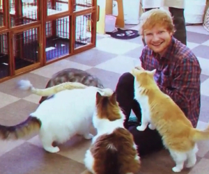 cats, ed sheeran, and animals image