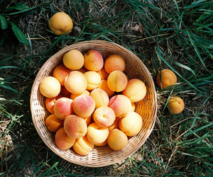 peach, fruit, and orange image