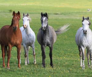 animal, horses, and nature image