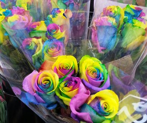 colorful, flowers, and rainbow image