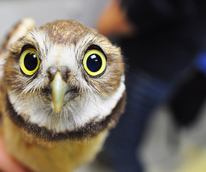 owl, photography, and cute image