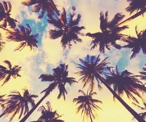 palm trees, beach, and header image