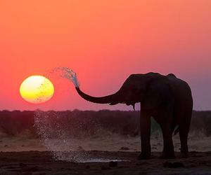 elephant, orange, and silhouette image