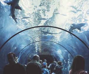 shark, water, and aquarium image