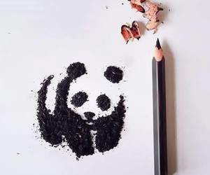 panda, art, and pencil image